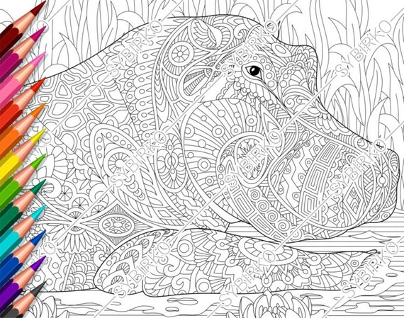 Coloring Pages For Adults Hippo Hippopotamus Adult Coloring Etsy
