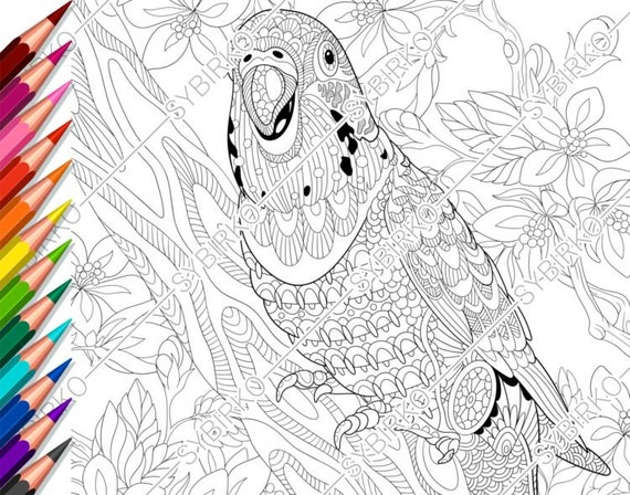 Coloring pages for adults. Budgie parrot. Adult coloring pages. Animal  coloring pages. Digital jpg-pdf coloring page. Instant download print