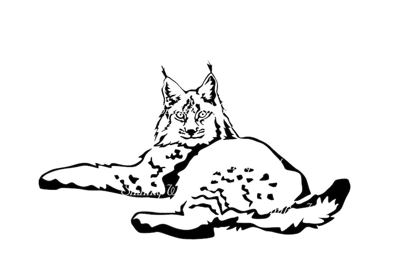 Bobcat Svg Clipart Artwork Bocat Art Lynx Rufus Printable Cut