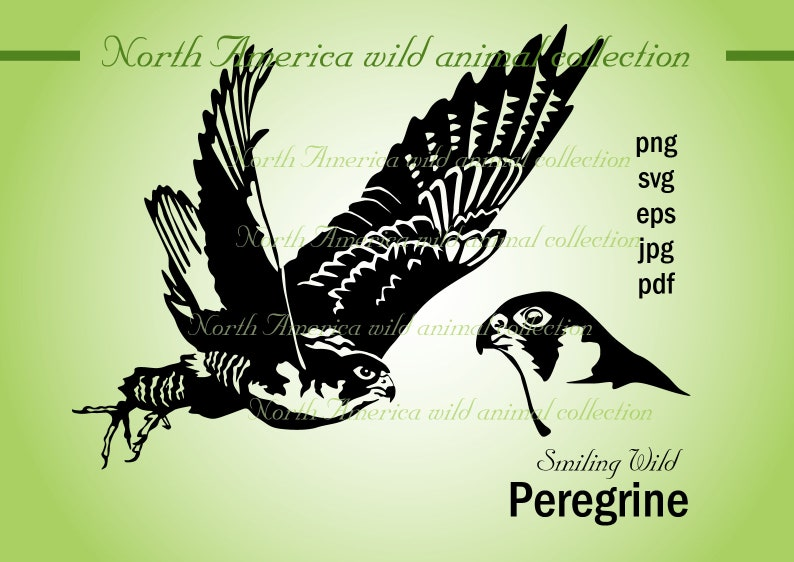 image regarding Printable Hawk Silhouette for Window named peregrine falcon svg clipart vector impression artwork duck hawk artwork art minimize document cuttable printable png portrait