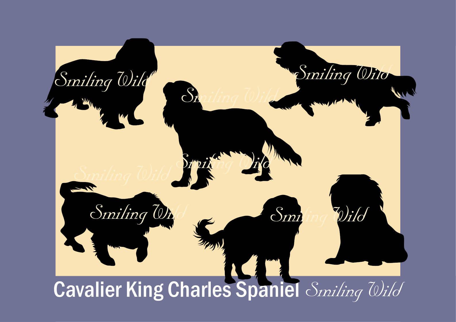 Cavalier King Charles Spaniel Clipart