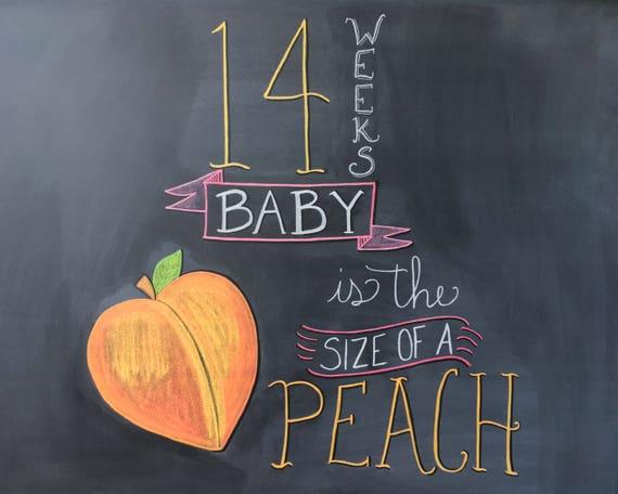 14 Weeks Pregnancy Chalkboard Sign Maternity Photo Prop