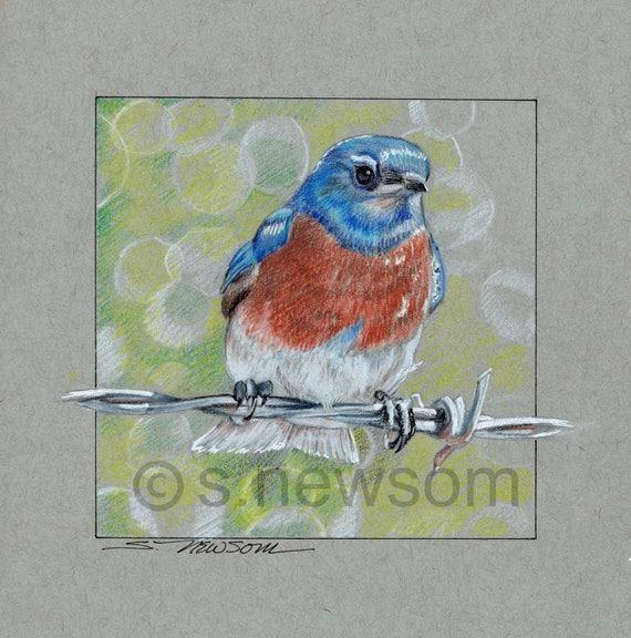 Bluebird Drawingoriginal Artworkwestern Bluebird Drawingbird Artpen And Ink Bird Drawing Wcolored Pencilblue Orange And Green