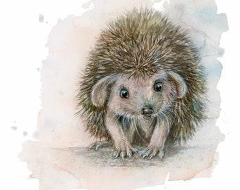 Hedgehog, baby hedgehog, cute, watercolor, art print, lightfast printed on watercolor paper