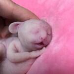 Full body silicone sleeping baby hybrid #1