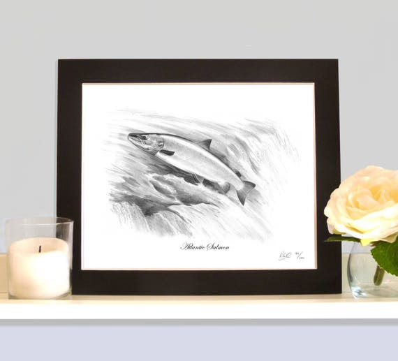 ATLANTIC SALMON Fly Fishing Art Drawing Print Picture Present Gift For Angler