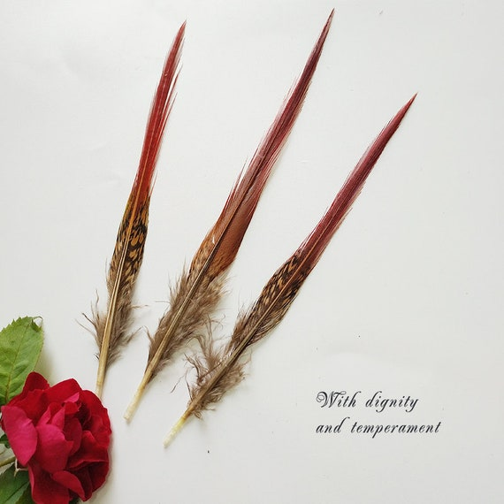 10-100pcs//lot Pure White 10-12inch Turkey Quill Feathers for Fashion Decorations