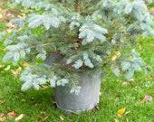 Christmas tree metal buck...