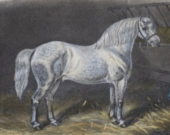 """19th Century Equine Hand Coloured Engraving Print """"SIR JOHN"""" 1869 E.Corbet, E.Hacker Published by Rogerson and Tuxford"""