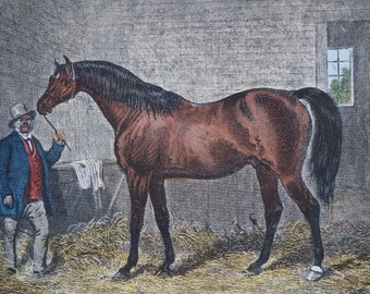 """19th Century Equine Hand Coloured Engraving Print """"COTHERSTONE"""" 1859 H.Barraud, E.Hacker Published by Rogerson and Tuxford"""