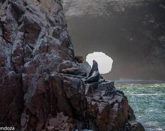 "Photography Print ""On the Edge"" Fine Art Photo Ocean Art Animal Art Ocean Photo Beach Photo Art Wildlife Photo Wildlife Print Ocean Print"