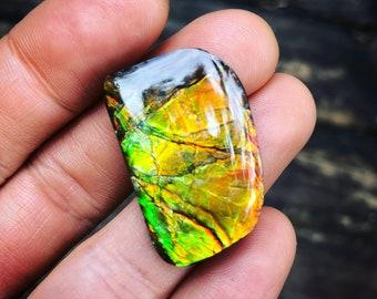Ammolite Cabochon Ammonite Opal Canadian Ammolite Gemstone Crystal a healing Jewelry Supplies Fossil Ammolite Cab