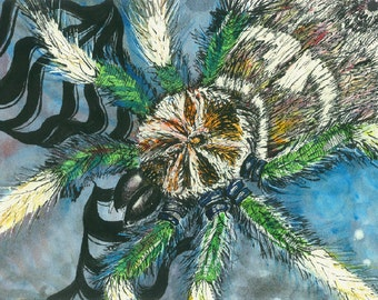 """Spider Art Print Paintings for Sale """"Tarantula"""" Prints Watercolour Artwork Abstract Art Contemporary Art Work Art Spider Pictures Painters"""