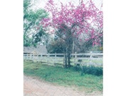 Dirt Road with Pink Tree Digital Backdrop Sitters backdrop Family Download Old country Road White Fence Equestrian backdrop easter spring
