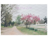 old Church Pink Tree Digital Backdrop Sitters Family Download Old country Road White Fence Equestrian backdrop horses backdrop easter spring