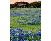 Easter Backdrop Digital Backdrop Spring Blue Bonnets Sitter Family Download Field by Old Farm Flowers Fairytale Composite Landscape backdrop