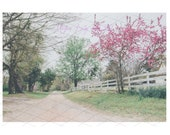 Pink Trees Digital Backdrop Sitters Family Download Old country Road with White Fence Equestrian backdrop horse Lover backdrop easter spring