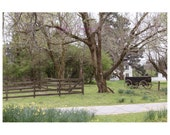 Sitters Farm Backdrop Digital Old Wagon wood Fence Wildflowers Fairytale Composite Forest Woods Old Tree Path Wedding Jonquils Daffodils