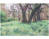 Spring Backdrop Download Printable Flowers bride or Sitter backdrop FairytaleComposite Forest Woods Old Tree Path Wedding Jonquils Daffodils