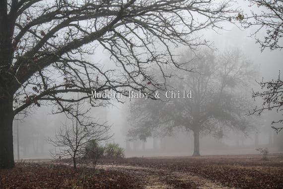 The branches are covered with fog Digital Picture Image JPG