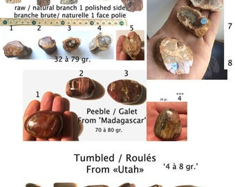 Fossilized wood 2 / pebbles rolled + natural
