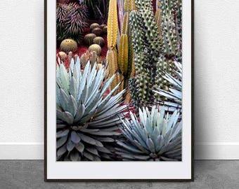 Cactus Garden, DIGITAL Download, Cactus Photography, Succulents, Botanical Art, Cacti, Cactus Art, Modern Art, Colorful Cacti, Printable Art
