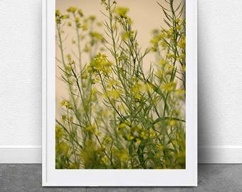 Meadows, DIGITAL Download, Wall Art, Yellow Flower Art, Photography, Nature Art, Printable Art, Botanical Art, Fine Art, Floral Photo Art,
