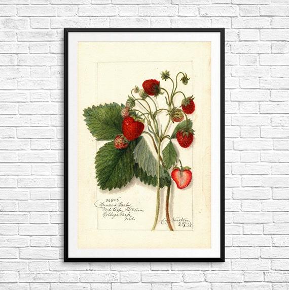 Erdbeere Drucke Erdbeere Kunstwerk Erdbeere Dekor Erdbeere | Etsy