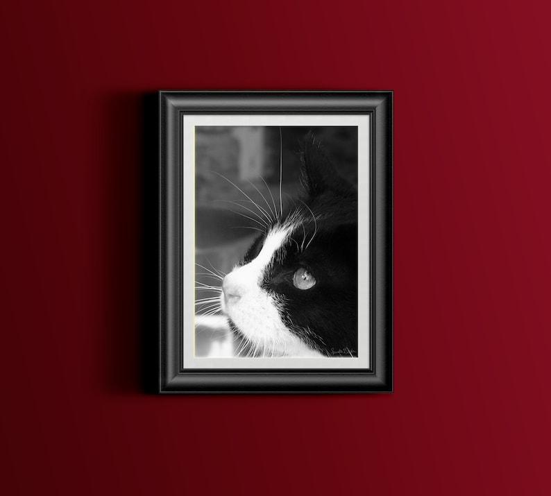 Feral Cat Photo Black and White Cat Photo Veterinary Art image 0