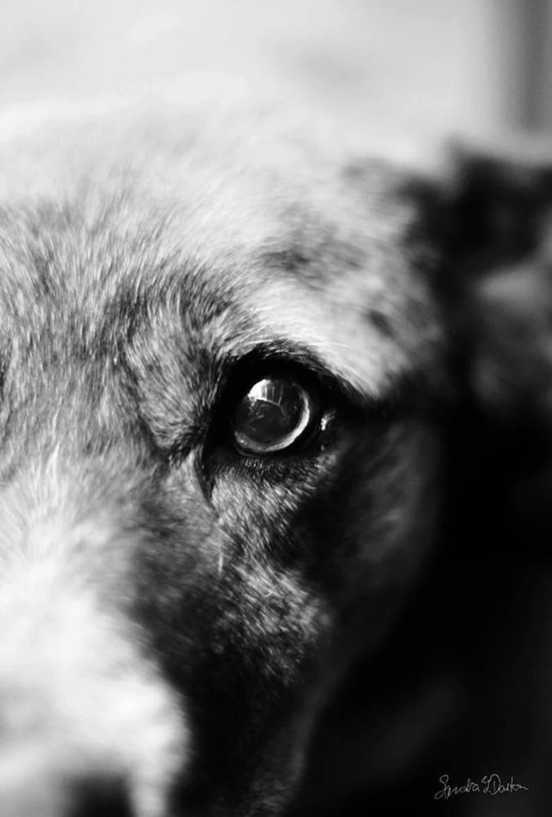 Dog Art Black and White Dog Photography Digital Download image 0