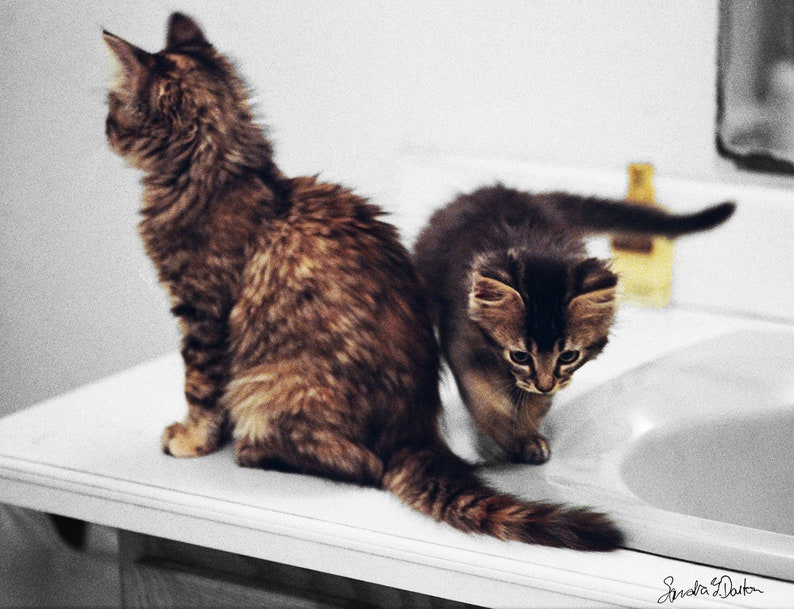 Color Kitten Photo Black and White background Digital image 0