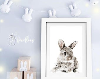 Animal Prints FRAMED