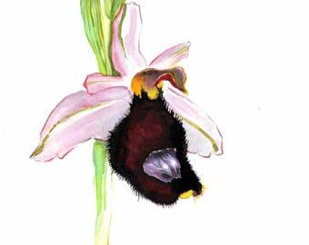 Wild orchid of Mugello