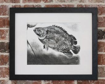 Tripletail Charcoal | Giclee Prints