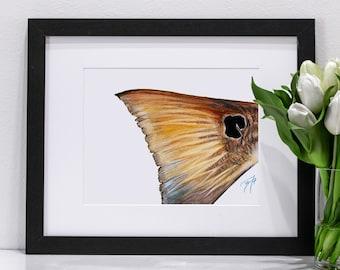 Redfish Tail Pastel | Giclee Prints