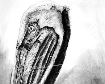 Limited Edition Pelican Charcoal Portrait | Fairhope Pier Pelican Artwork | Mobile Bay | Black and White Coastal Decor | Brandon Finnorn