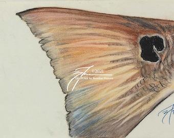 Original Redfish Sketch | Pastel
