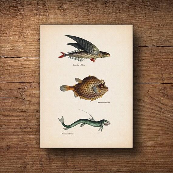 Strona do podłączenia ryb