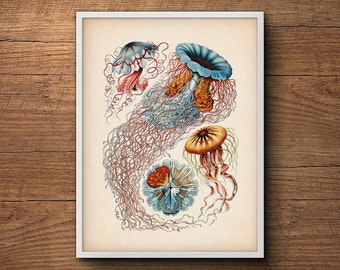 Jellyfish Wall Print by Ernst Haeckel – Jellyfish Art, Jellyfish Print, Jellyfish Art Print, Coastal Decor, Beach Decor