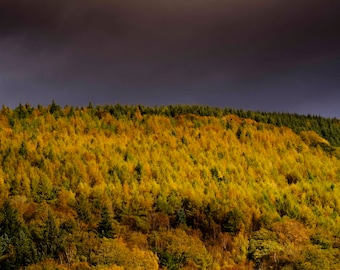 Autumn in Cwmcarn