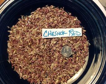 GARLIC BULBILS/seeds - 5 Variety Sampler/Combo Pack!  -Organically grown  LOOK!