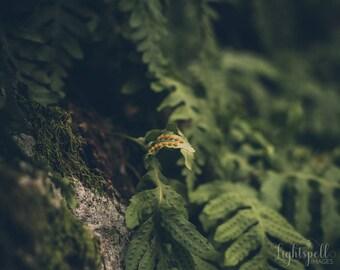 Botanical Wall Art, Nature Print, Ferns Photo, Photography, Still Life, Fine Art Photograph, Wall Decor, Fern, Moody