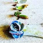 Propagation kit (20 Succulent Leaves)