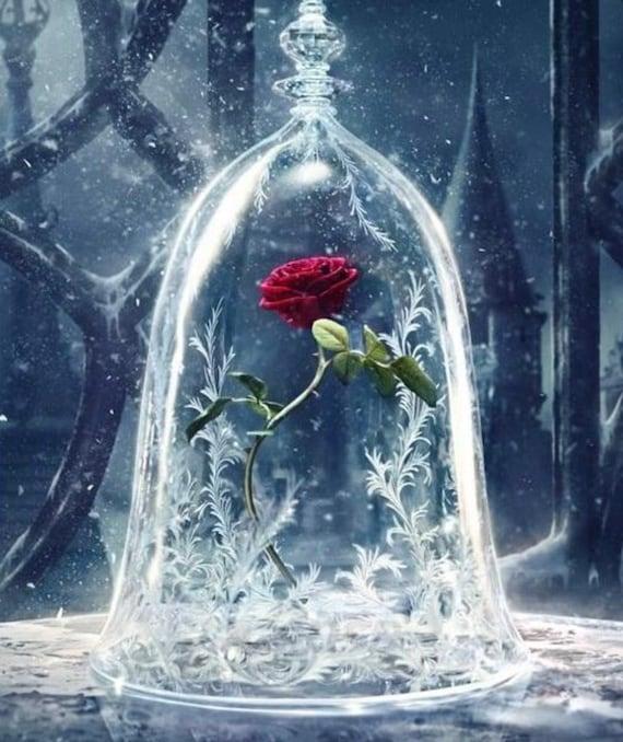 rose schöne und das biest