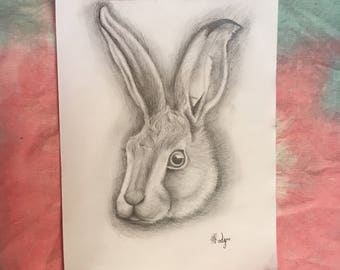 Hare Pencil Drawing