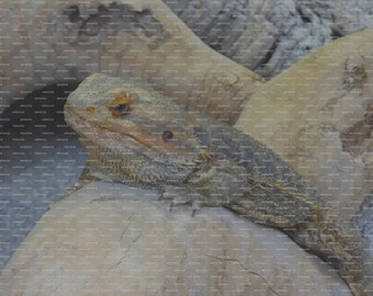 Wooden Jigsaw Puzzle Using Image of a Reptile