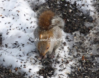 Wooden Jigsaw Puzzle Using Image of a Squirrel in the Snow