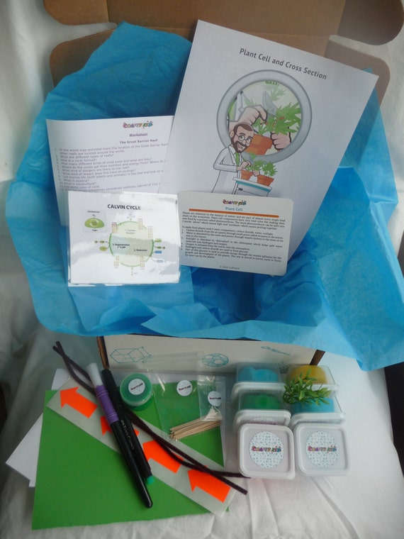 Pflanzliche Zelle Science Projekte Für Kinder Schulprojekt Mittlere Schule Umwelt Projekt Kit Bildungsprojekt Biologie Pflanzen