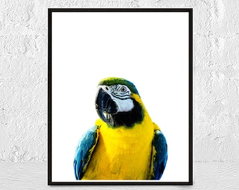 parrot print, bird print, tropical print, parrot wall art, bird wall art, home decor, parrot photo, tropical decor, bird photography, macaw