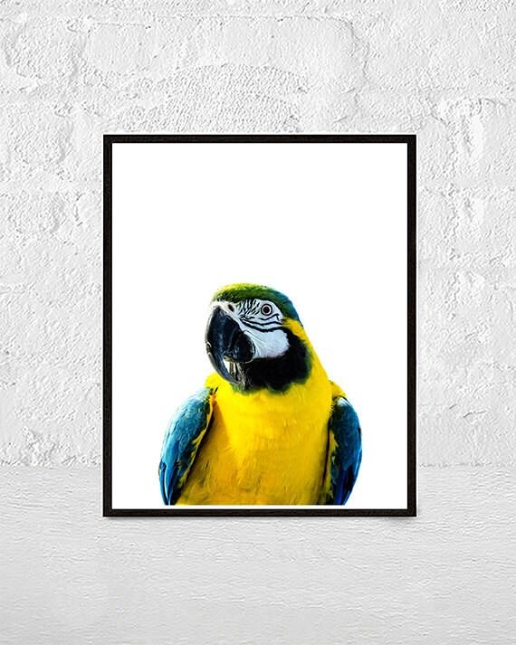 Parrot Print Bird Tropical Wall Art